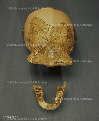 Cast of skull and lower jaw-bone of the                Lan-T'ien ape-man found in excavations                 at Lan-T'ien, Shensi, China, in 1963                   and 1964.                                              Height: 18 cm