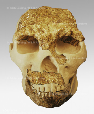Cast of the skull-cap of the Peking Man                