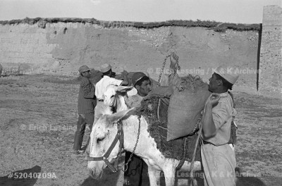 In 1952 locust swarms flying in from Saudi Arabia threatened Iran's harvest. In a unique cooperation, US and Soviet pilots and specialists sprayed the infested areas. Iranian soldiers loading BHC bait on donkeys for Soviet planes at Mehmetabad near Kerman.