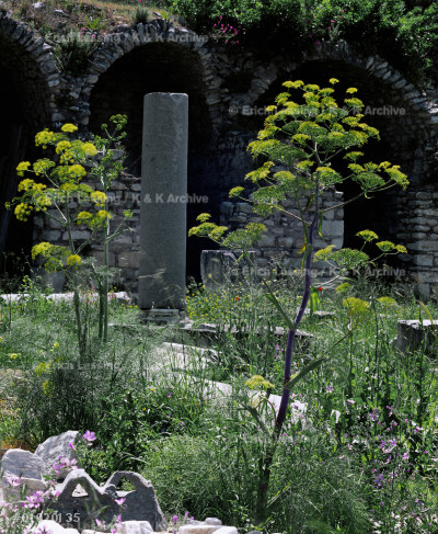 Market place overgrown by blooming vegetation (Ferrula 
