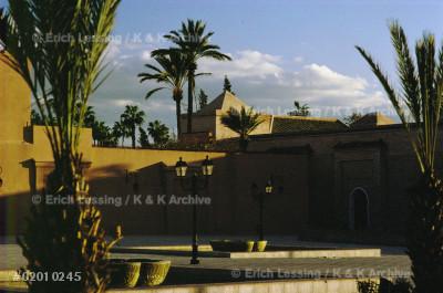 The palm-grove of Marrakech,Morocco.