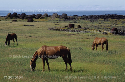 Easter Island,called Rapa Nui by its Polynesian in-    habitants, is a volcanic island 3,790 kms west         of the Chilean coast.Cattle and horses graze in the    plain between the three extinct volcanos